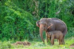 De olifant van de moeder en van de baby Stock Foto