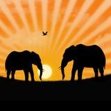 De olifant van de savanne Royalty-vrije Stock Afbeeldingen