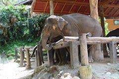 De olifant van het park in de dierentuin van Mysore Royalty-vrije Stock Afbeeldingen