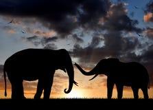 De olifant van het silhouet Royalty-vrije Stock Afbeelding