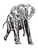 De olifant van Rampaging stock foto's