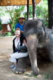De olifant zit Stock Afbeelding