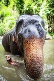 De olifant zit in waterval, rivier Stock Foto's
