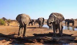 De olifanten bezoeken een kamp waterhole, met een loge zichtbaar op de achtergrond Nehimba, Zimbabwe royalty-vrije stock foto's