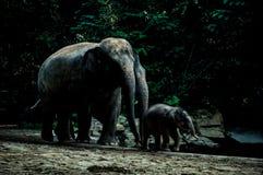 De olifanten in de dierentuin Royalty-vrije Stock Foto's