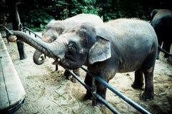 De olifanten in de dierentuin stock afbeelding