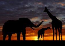 De olifanten en de giraf van het silhouet stock foto's