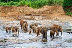 De olifanten nemen een bad in de rivier Royalty-vrije Stock Foto's