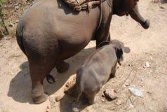 De Olifanten van het mamma en van de Baby Royalty-vrije Stock Foto