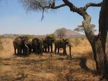 De Olifanten van Tarangire Royalty-vrije Stock Afbeelding