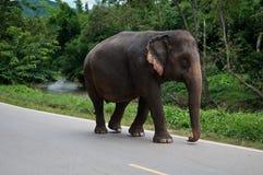 De olifanten van Thailand Stock Foto's
