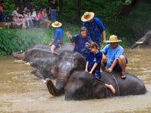 De olifantsdouche toont Stock Fotografie