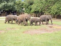 De olifantsweeshuis van Pinnawala Stock Foto