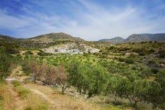 De olijfgaard van Kreta Stock Foto's