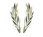 De olijfkroon van de olijftak stock afbeeldingen