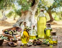 De olijfolie en de bessen zijn op de houten lijst onder de olijfboom royalty-vrije stock afbeelding