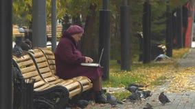 De oma gebruikt laptop bij park 2 schoten Langzame Motie Clouse-op stock videobeelden