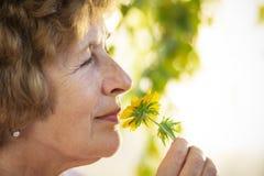 De oma ruikt een gele bloem stock afbeeldingen
