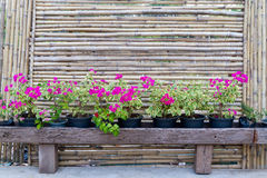 De omheining en de bloem van het bamboe Royalty-vrije Stock Foto