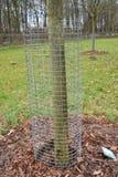 de omheining van de boombescherming tegen konijnen Stock Afbeeldingen