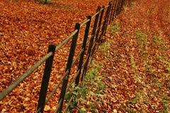 De Omheining van de herfst Stock Foto's