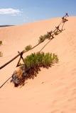 De Omheining van het logboek bij Duinen van het Zand van het Koraal de Roze Stock Foto's
