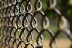 De omheining van het metaalnetwerk op groen grasclose-up als achtergrond royalty-vrije stock foto's
