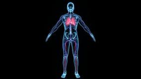De omloop van het Deoxygenatedbloed in het lichaam vector illustratie