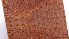 De omwenteling, natuurlijke reptielhuid, kan als achtergrond, textuur worden gebruikt Geïsoleerde stock video