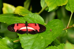 De Onbekende Vlinder Royalty-vrije Stock Foto's