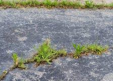 De onderbreking van het onkruid door asfalt Royalty-vrije Stock Foto