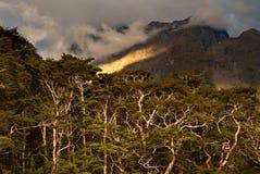 De onderbrekingen van de avondzon door in Fiordlands NP Stock Foto's