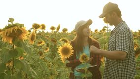 De onderneemster en de zakenman op gebied plannen hun inkomen de agronoom bestudeert gewas van een zonnebloem de werken van de la stock footage