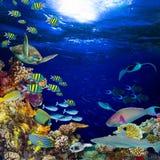 De onderwater vierkante vierkantige achtergrond van het koraalriflandschap royalty-vrije stock foto
