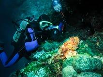 De onderwaterfotograaf neemt beeld van een schorpioenvis Stock Afbeeldingen