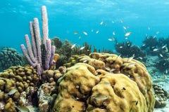 De onderwaterspons van de koraalrif purpere buis stock afbeeldingen