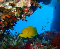 De onderwaterwereld in diep water in koraalrif en installaties bloeit flora in het blauwe wereld mariene wild, Vissen, koralen en stock foto's