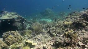 De onderwaterwereld van Bali Indonesië Marine Life stock videobeelden