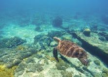De onderwaterzeeschildpad sluit foto Groene schildpad in blauwe lagune Mooie zeeschildpad Royalty-vrije Stock Foto