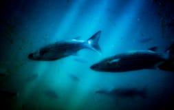 In de onderzeeër Royalty-vrije Stock Foto's