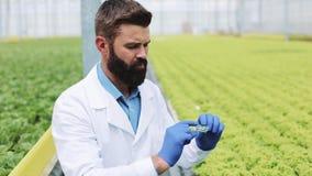 De onderzoeker neemt een sonde van groene installatie en zet het in een petrischaal Landbouwingenieur die in serre werken stock video