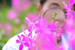 De onderzoekers nemen vergrootglas om purpere te glanzen orchideeën stock afbeeldingen