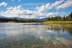 De ondiepe rivier in park Yellowstone Stock Foto's