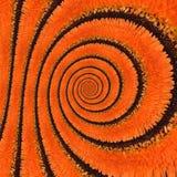 De oneindigheids spiraalvormige abstracte achtergrond van de Gerberabloem Royalty-vrije Stock Afbeelding