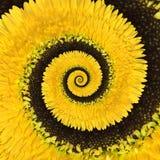 De oneindigheids spiraalvormige abstracte achtergrond van de Gerberabloem Stock Fotografie