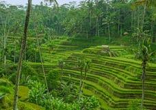 De oneindigheidspool bij tropische toevlucht in Azië met mening aan de wildernis in vakantie reist en toerismeconcept stock foto