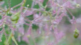 De ongebruikelijke mooie bloemgolven op wind stock videobeelden