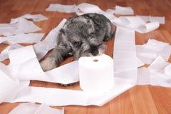 De ongehoorzame leuke hond van het schnauzerpuppy maakte thuis knoeien De hond is naar huis alleen stock foto