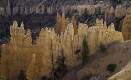 De Ongeluksboden - Bryce Canyon National Park Royalty-vrije Stock Afbeelding