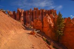 De Ongeluksboden van Bryce Canyon Royalty-vrije Stock Foto's